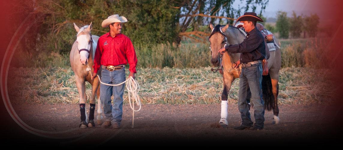 Padilla Performance Horses